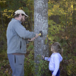 Marking Willow's red maple