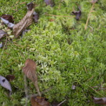 a spongy bed of moss that we had fun walking across for its softness
